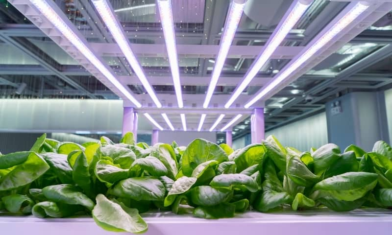 salade culture indoor growing hydoponic led light auxine jardinerie alternative colmar