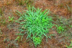 se debarrasser des mauvaises herbes