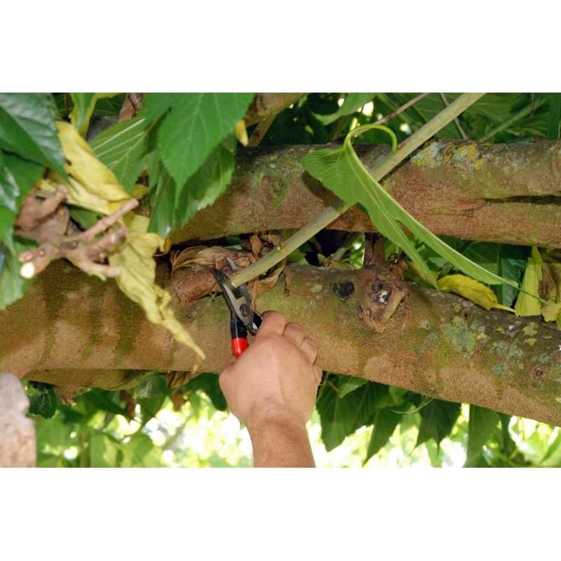 secateur japonais okatsune elagage arbre