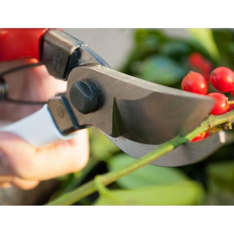 secateur japonais okatsune taille des rosiers