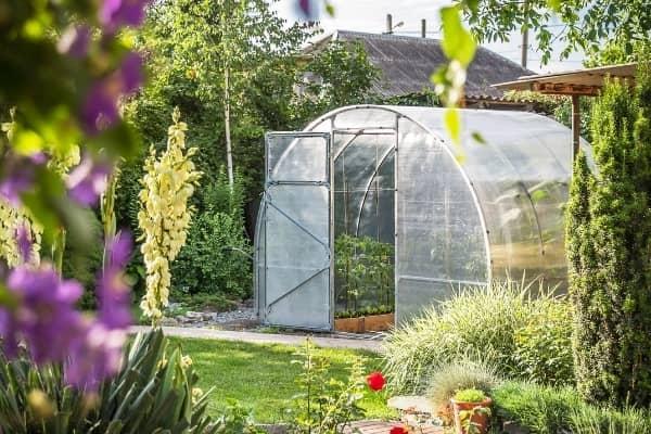 serre de jardin pour planter des tomates