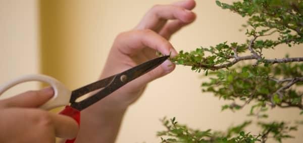 soin des plantes taille ciseau secateur auxine jardinerie alternative colmar