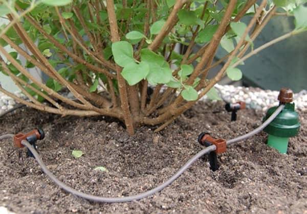 systeme arrosage jardin