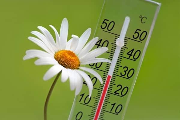 temperature controle du climat auxine jardinerie alternative colmar