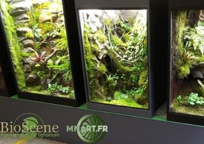 terrarium decor tropical dendrobates xx mnart made in alsace sur mesure haut de gamme plantes reptile lezard bioscene auxine jardinerie alternative colmar