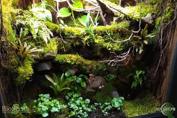 terrarium terreau sol bioactif pumice pomice auxine jardinerie alternative colmar