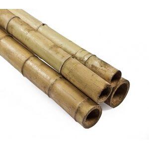 tuteur bambou
