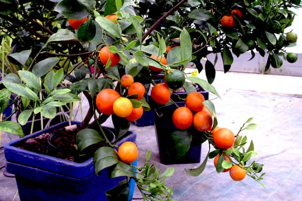 urbaponia hydroponie auxine jardinerie alternative colmar