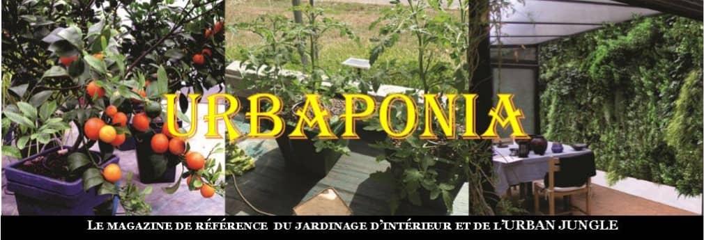 urbaponia magazine jardinage moderne auxine colmar growshop